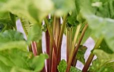 Nya planteringar på våra områden